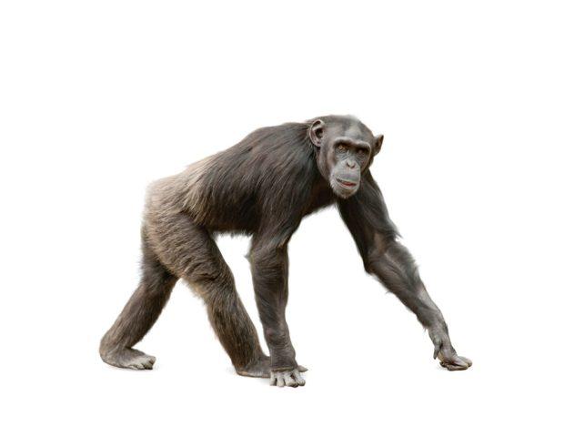 Гороскоп для обезьяны, сентябрь 2018