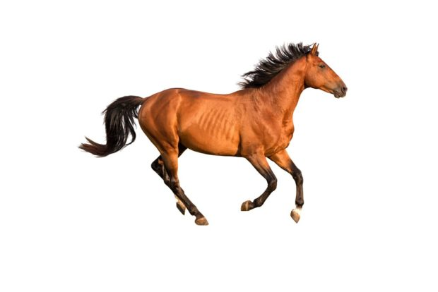Гороскоп для лошади, сентябрь 2018