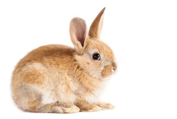 Гороскоп для кролика, сентябрь 2018