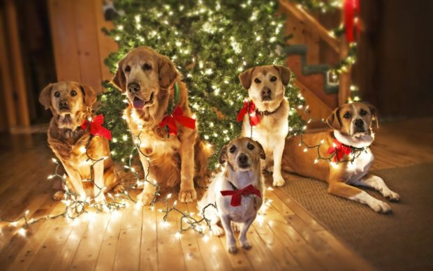 Как встречать 2018 год Собаки