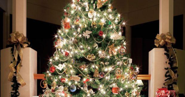Как выбрать елку на Новый год 2019?