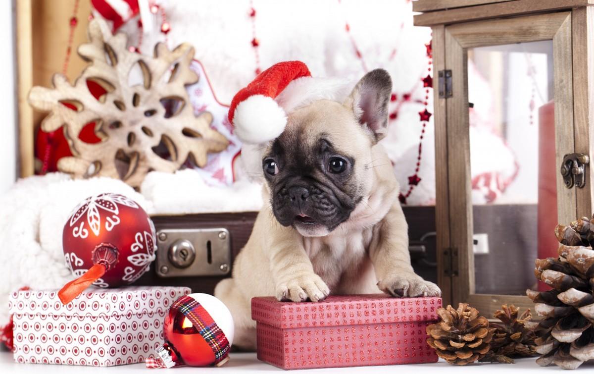 Картинки с собакой на новый год 2018