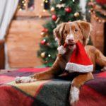 Обои для рабочего стола - новогодняя собака