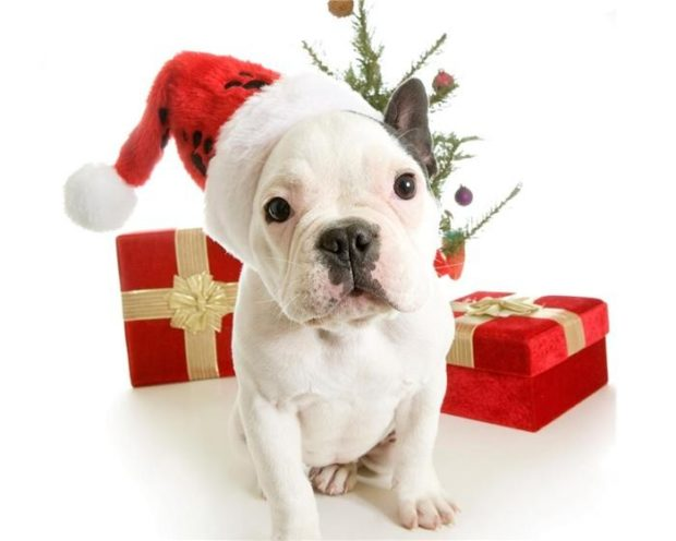 Новогодние картинки с символом Собаки 2018