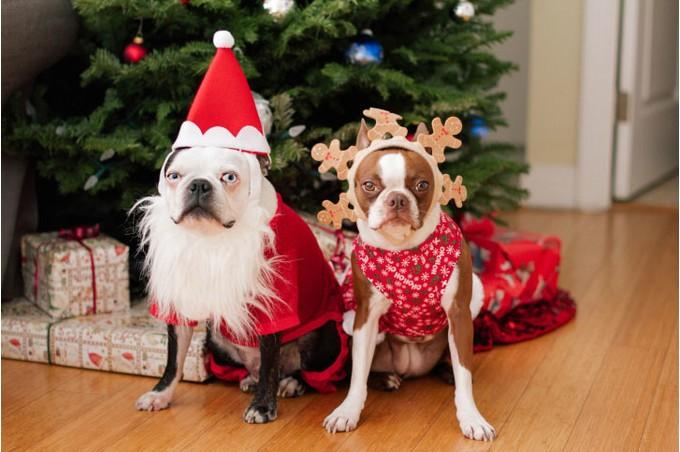 Картинки с новогодними собаками 2018