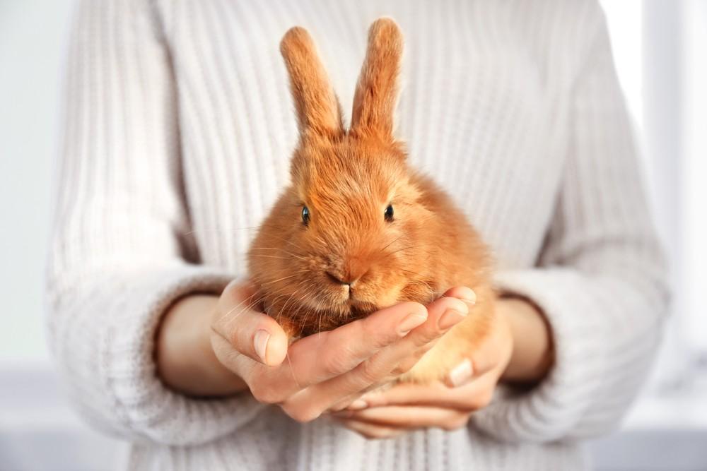 год кролика любовный гороскоп