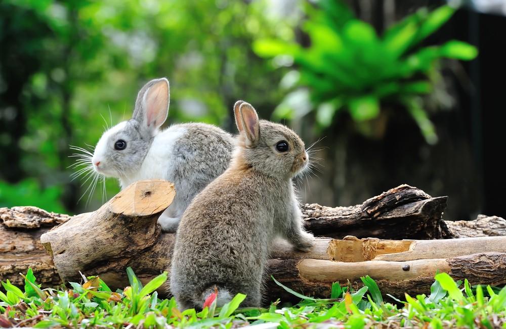 Когда будет год кролика 2018
