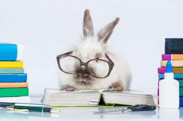 Кролик 2018