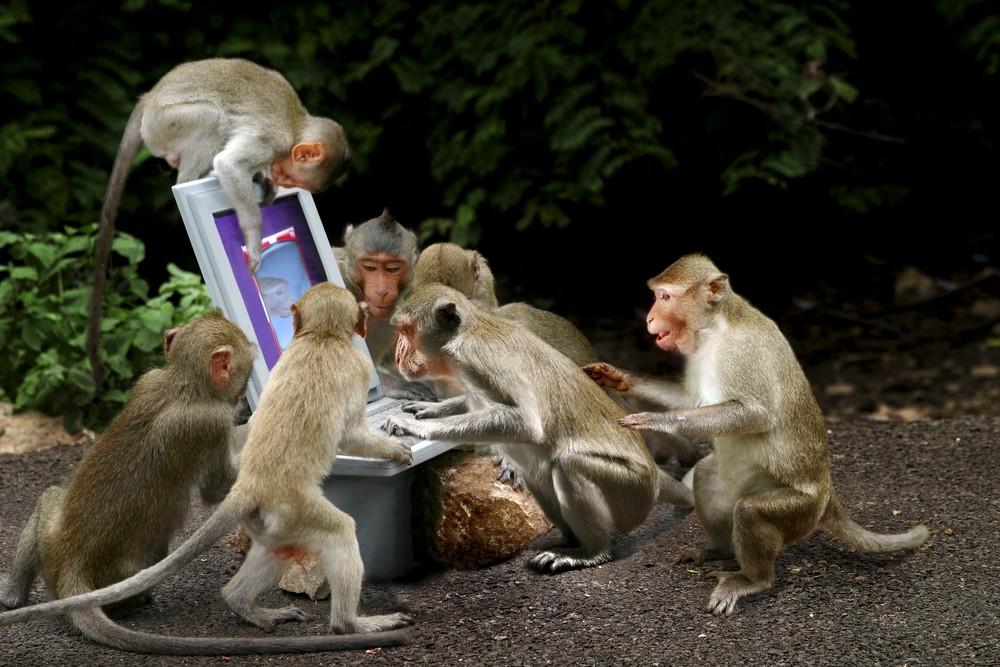 Что ждать в год обезьяны 2016