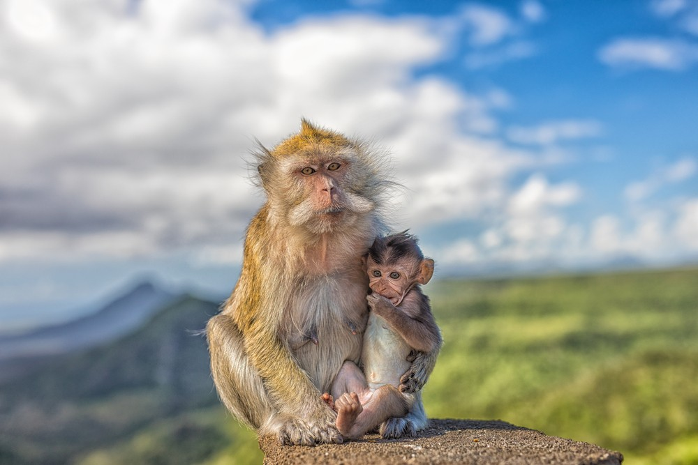 Год Обезьяны гороскоп 2018 – Любовь, семья