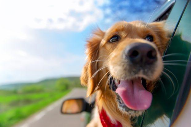Гороскоп для Собаки на 2018 год