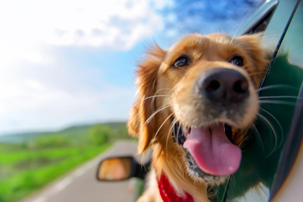 Гороскоп на 2018 год для Собаки: женщина и мужчина