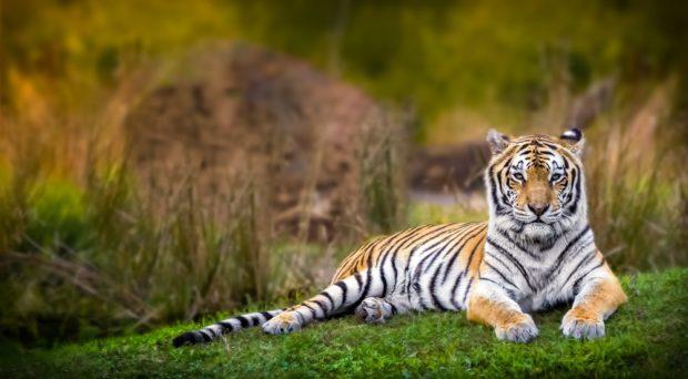 Гороскоп для Тигра на 2018 год