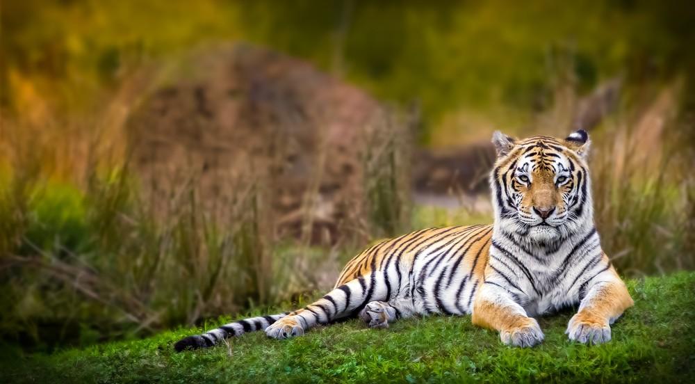 год тигра гороскоп любовь