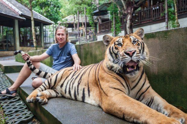 Тигр 2018