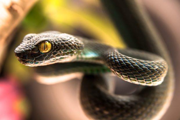 Гороскоп для Змеи на 2018 год