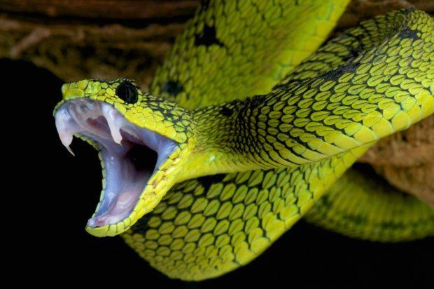 Восточный гороскоп для Змеи