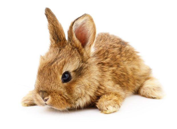 Восточный гороскоп для Кролика ( Кота )