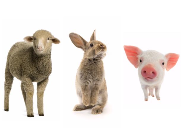 Кролик (Кот), Овца (Коза), Свинья