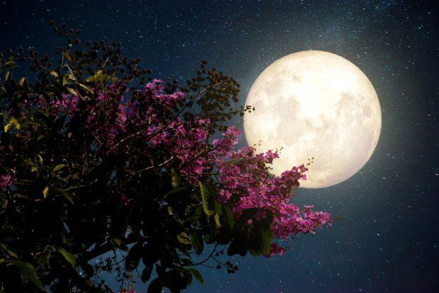 Лунный календарь цветовода на 2018 год