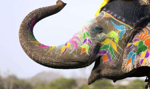 Слон Гоа