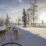 Лапландия Новый год 2018
