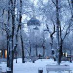 Лес Воронеж