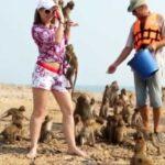 Остров обезьян таиланд