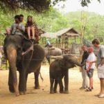 Деревня слонов таиланд